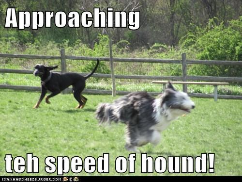 dogs elk hound speed of sound - 6130598400