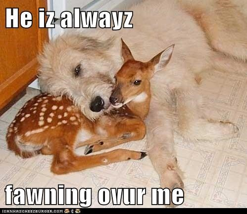 cuddle deer dogs fawn - 6130631936