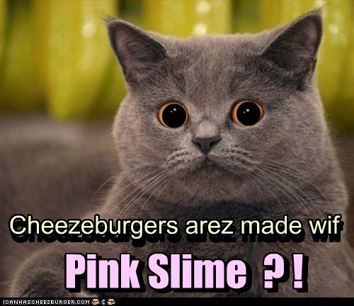Cheezburger Image 6130737408