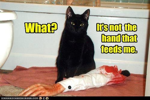 arm attack basement cat bite danger excuse pun saying - 6130939648