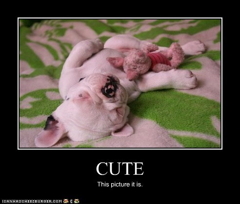 CUTE This picture it is.