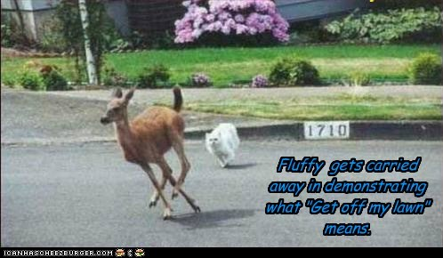 cat deer demonstration - 6131575040