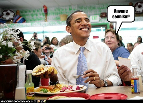 barack obama bo dogs political pictures - 6131634176