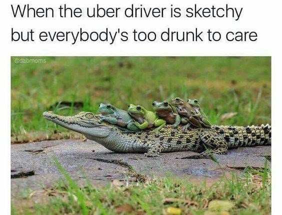 funny animals that are using uber or other forms of mobility as a service product offering