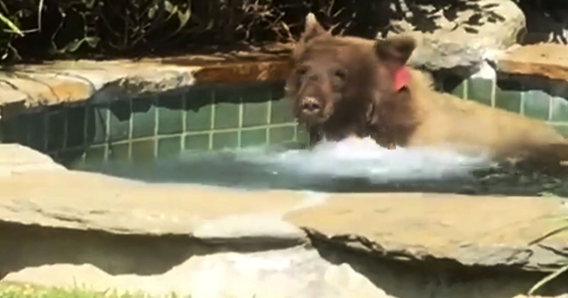 hot tub summer chilling bear margaritas Video - 6132229