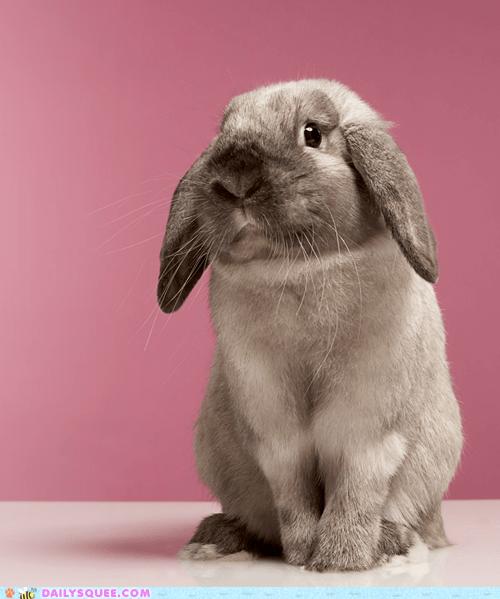 bunny Sad sweet worried - 6132263168