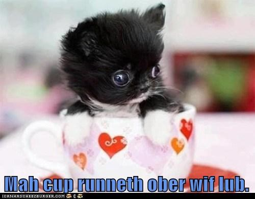 love puppy tea cup what breed