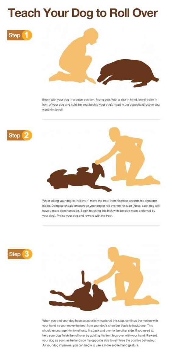 dogs tips puppy training useful - 6132741