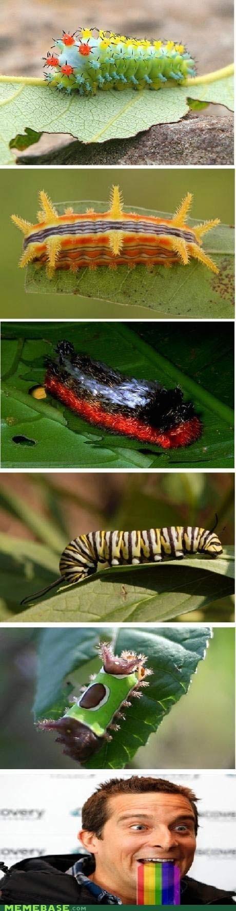 bear grylls bugs caterpillar mouth rainbow - 6132790784