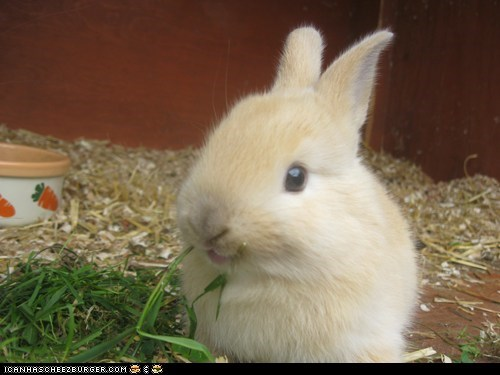 bunny eat grass hutch rabbit - 6132836352