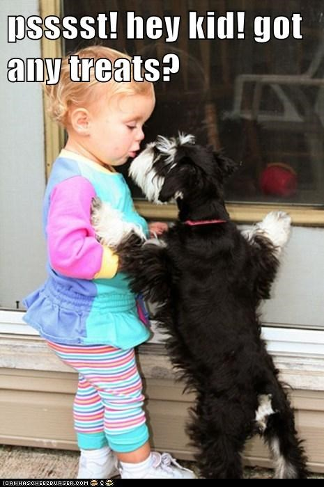 baby dogs treats what breed - 6132869888