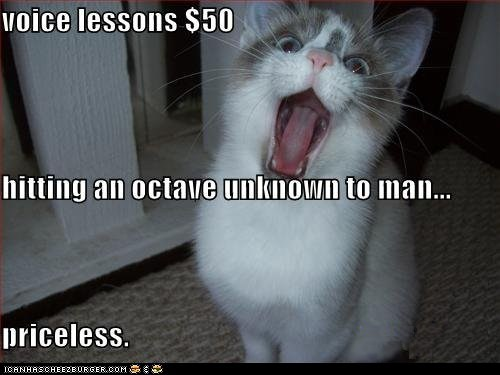 classic classics lolcat Music priceless scream sing voice lessons