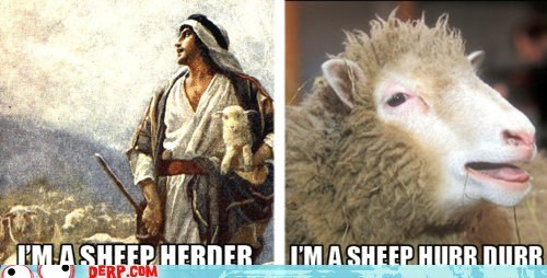 derp durrr herder hurrr sheep