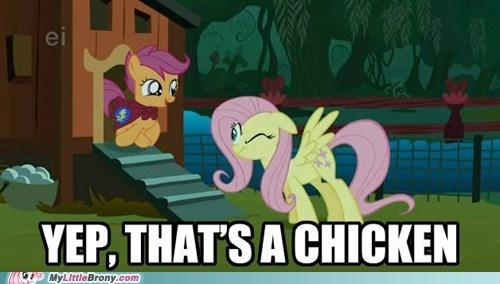 chicken fluttershy meme Scootaloo - 6133416960