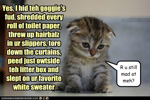 Yes, I hid teh goggie's fud, shredded every roll of toilet paper, threw up hairbalz in ur slippers, tore down the curtains, peed just owtside teh litter box and slept on ur favorite white sweater R u still mad at meh? Chech19565 190412