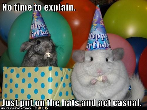 act,birthday,birthdays,casual,chinchillas,hamster,inconspicuous,no time to explain,party hats