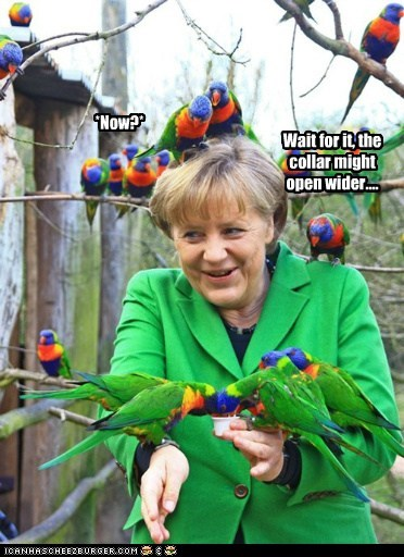 angela merkel birds political pictures - 6133800192