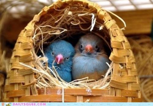 basket birds couple nest pair - 6133856768