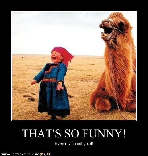 THAT'S SO FUNNY! Even my camel got it!