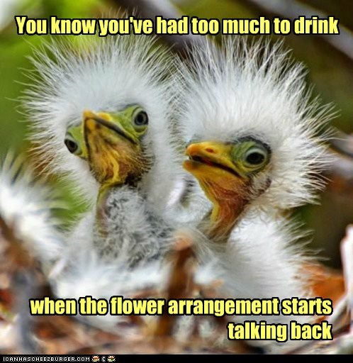 You know you've had too much to drink when the flower arrangement starts talking back