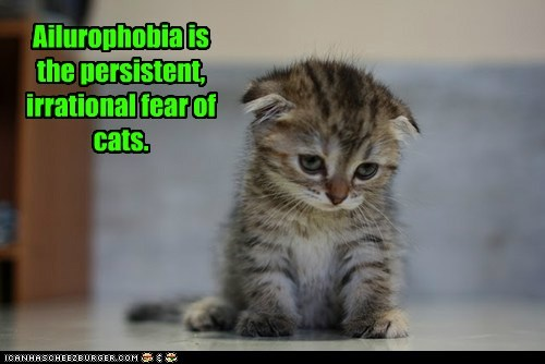 Ailurophobia is the persistent, irrational fear of cats.