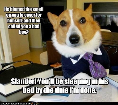 Lawyer Dog - 6134369536
