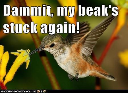 again,beak,damn it,eating,hummingbird,stuck,sugar
