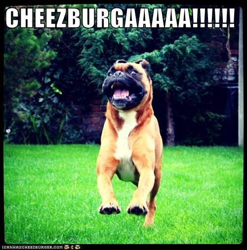 Cheezburger Image 6134871808