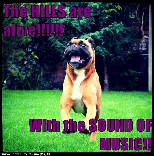 dogs,Rotweiler,sing,sound of music