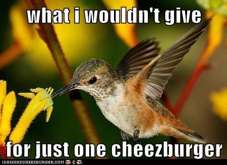 Cheezburger Image 6135237632