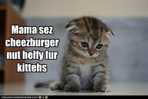 Mama sez cheezburger nut helfy fur kittehs