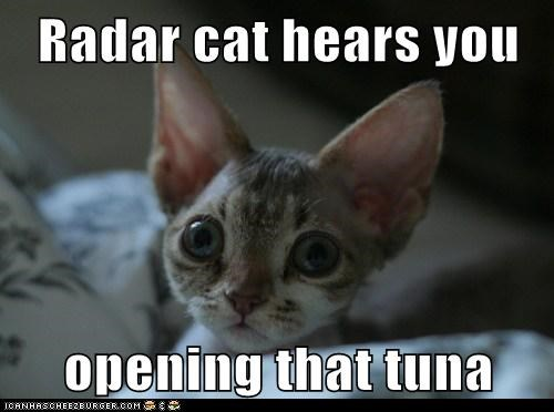 big ears,can,Cats,devon rex,ears,food,listen,lolcats,nom,open,radar,radar cat,tuna