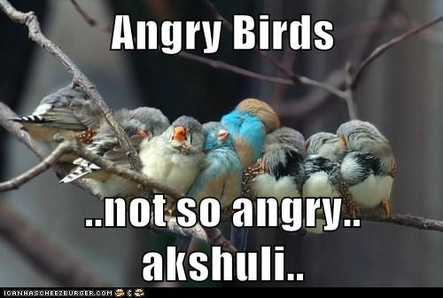 Angry Birds ..not so angry.. akshuli..