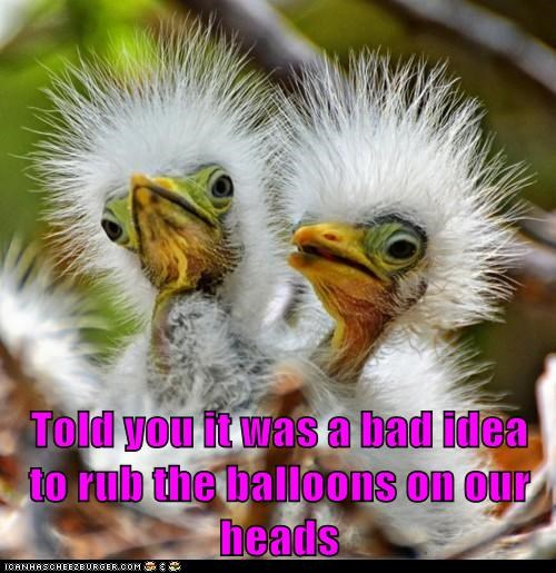 baby birds,bad idea,Balloons,feathers,hair,rub,siblings,static electricity,stick up
