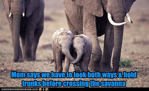 Mom says we have to look both ways & hold trunks before crossing the savanna
