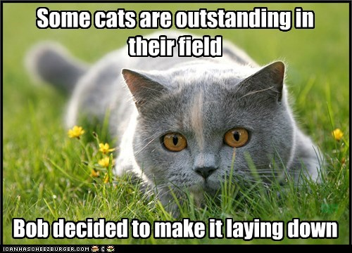 Some cats are outstanding in their field Bob decided to make it laying down SirT