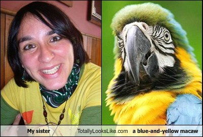 My sister Totally Looks Like a blue-and-yellow macaw