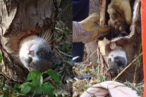 cat kitteh rescue stuck tree - 6137230592