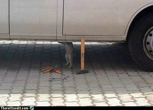 car repair,cat,hammer,lolcats,wrench