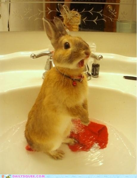bath bunny face mouth rabbit sink water yell - 6137567744