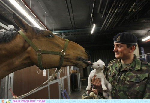 dogs,friends,horse,horses,Interspecies Love,kisses,licking,military,puppies,puppy,soldiers