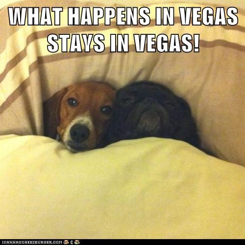 Dog meme of a pug and chocolate Labrador chilling in bed with the caption of 'what happens in Vegas...'
