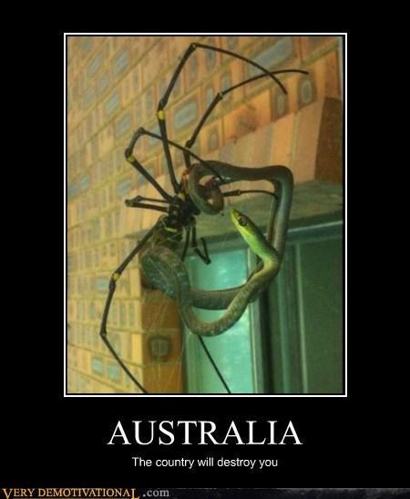 australia snake spider Terrifying - 6138068480