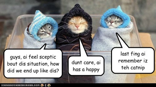 guys, ai feel sceptic bout dis situation, how did we end up like dis? dunt care, ai has a happy last fing ai remember iz teh catnip