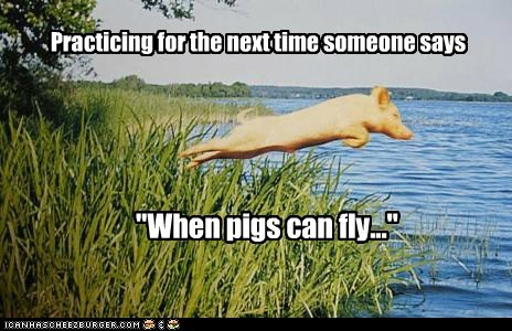 flying jumping pig practicing trying when pigs fly - 6138411264