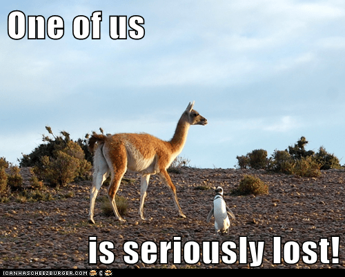 desert,llama,lost,money,one of us,out of place,penguin