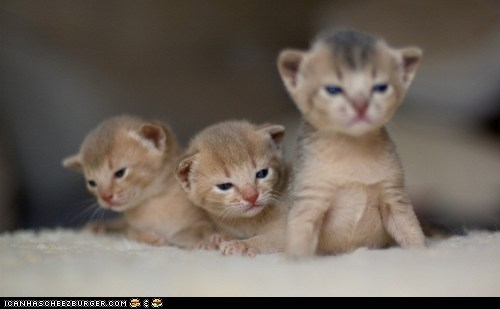 Cats,cyoot kitteh of teh day,kitten,squee,three,three cats