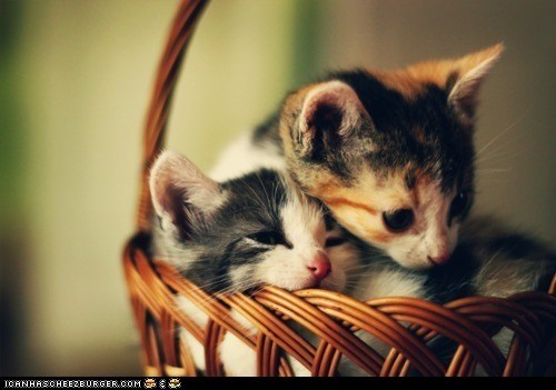 baskets,Cats,cuddles,cuddling,cyoot kitteh of teh day,kitten,two cats
