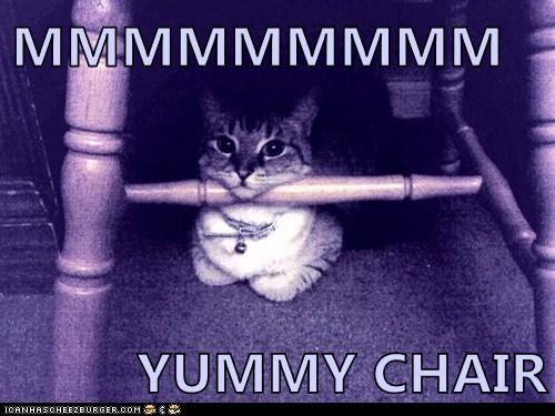 Cheezburger Image 6138681856