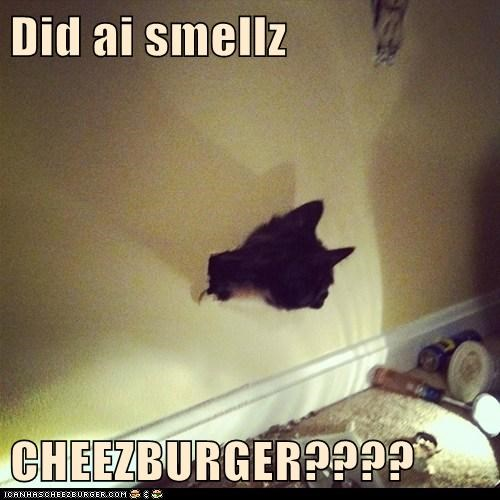 Cheezburger Image 6139047936